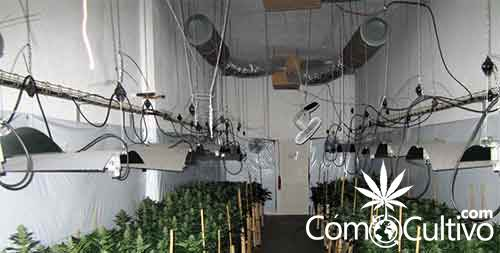 cultivo-indoor